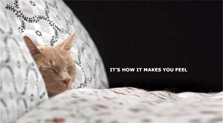 こんなIKEAなら毎日でも行きたい! 100匹のネコが住むIKEA(IKEA cats advert)