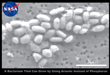 NASAによる「GFAJ-1:ヒ素を用いて増殖するバクテリア」の発見で宇宙科学が変わる?