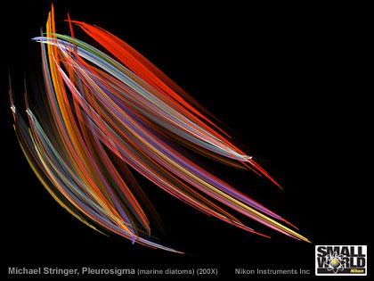 「Nikon Small World」、顕微鏡写真コンテストの写真を壁紙にいかが?