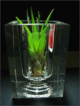 Tillandsia_2.jpg