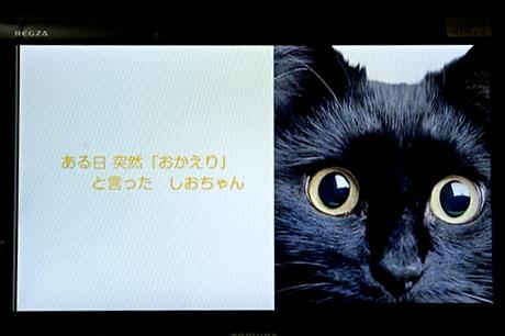 テレビで快適インターネット「ブラウザBOX」を使ってみた:モニター日記-1