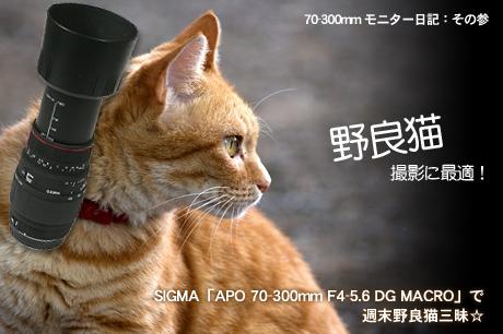 野良猫撮影に最適!SIGMA「APO 70-300mm F4-5.6 DG MACRO」で猫三昧☆