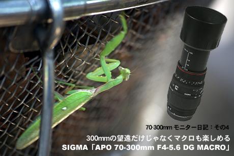 300mmの望遠だけじゃなくマクロ撮影も楽しめる!SIGMA「APO 70-300mm F4-5.6 DG MACRO」