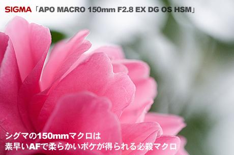 SIGMA「APO MACRO 150mm F2.8 EX DG OS HSM」は素早いAFで柔らかいボケが得られる必殺マクロ