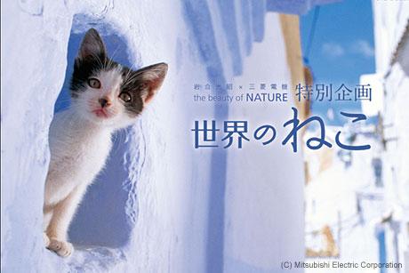 猫好き必見! 岩合光昭×三菱電機『the beauty of NATURE』で猫だらけの週末